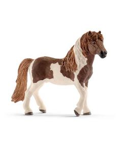 IJslandse Pony Hengst (SCI13815)
