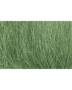 Field Grass, Medium Green (WOOFG174)